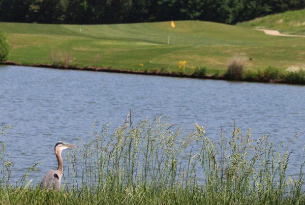 HCU Pat Kerr Golf Scramble
