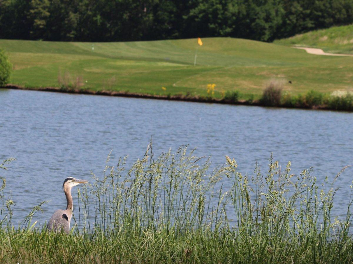 Golf Tournament Canceled